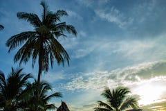 Beaux matins avec les nuages et les arbres de noix de coco légers Photo stock