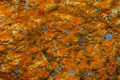 Beaux modèles colorés de lichen sur les roches dans le Patagonia Photo stock