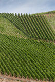 Beaux modèles créés par des vignobles sur des pentes de Bopparder Hamm au-dessus de la vallée du Rhin, Allemagne Image libre de droits