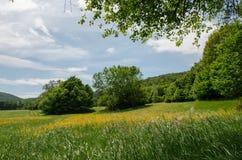 Beaux moments sous l'arbre dans le domaine photos libres de droits