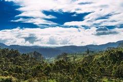 Beaux nuages blancs au-dessus d'une forêt verte photos libres de droits
