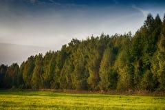 Beaux nuages blancs au-dessus de la forêt et du champ Photos stock