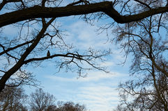 Beaux nuages et arbres blancs d'automne contre le ciel bleu Photos libres de droits