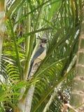 beaux objets exotiques de cacatoès d'oiseau images libres de droits