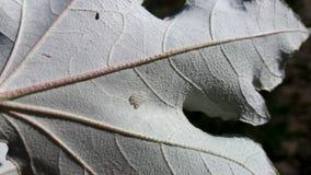 Beaux oeufs blancs de feuille et d'araignée Images libres de droits