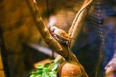 Beaux oiseaux colorés Images stock