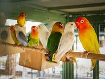 Beaux oiseaux d'amour Photo libre de droits