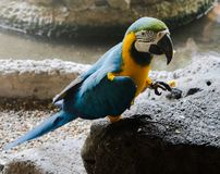 Beaux oiseaux d'ara et de perroquet de plan rapproch? en parcs publics images stock