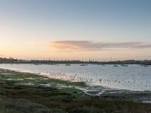 Beaux oiseaux sur des pluviers d'eseex de marais de sel alimentant le Ba de paysage Images libres de droits