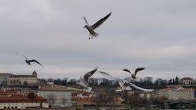 Beaux oiseaux volant au-dessus de la ville Photo stock
