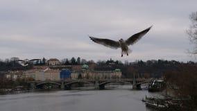 Beaux oiseaux volant au-dessus de Prague Photographie stock