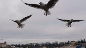 Beaux oiseaux volant sur le ciel Photographie stock libre de droits