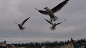 Beaux oiseaux volant sur le ciel de la ville de Prague Photos stock