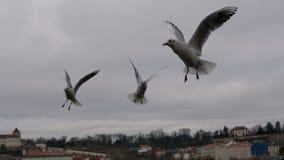 Beaux oiseaux volant sur le ciel de Prague Photographie stock