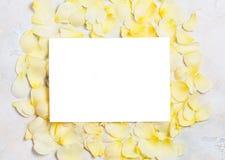 Beaux pétales de rose en pastel crèmes sur le fond concret Proue d'étoile bleue avec la bande bleue (enveloppe de cadeau) sur le  Images stock