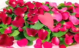 Beaux pétales de rose rouges arrosés sur la feuille et remplis avec amour Photos stock