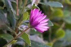 Beaux pétales roses de fleur décoratifs images stock