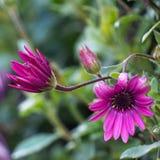 Beaux pétales roses de fleur décoratifs photos stock