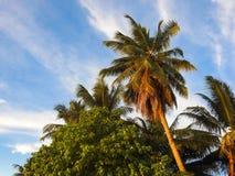 Beaux palmiers sur la plage de l'île de Digue de La photographie stock libre de droits