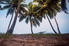Beaux palmiers sur le fond de ciel bleu sur la plage Photo libre de droits