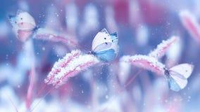 Beaux papillons dans la neige sur l'herbe sauvage sur un fond bleu et rose Imag naturel de Noël artistique d'hiver de chutes de n image libre de droits