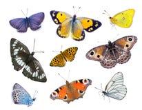 Beaux papillons multicolores Photographie stock libre de droits