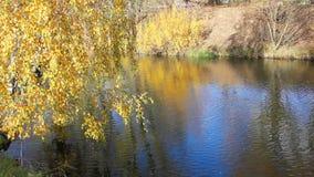 Beaux parc et rivière automnaux banque de vidéos