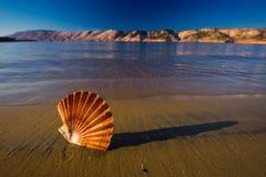 Beaux paysages, coquilles sur la plage en Croatie Photographie stock libre de droits