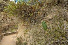 Beaux paysages de Barranco del Infierno dans Ténérife Images stock