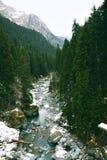 Beaux paysages de forêt d'hiver images stock