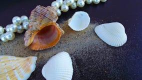 Beaux perles et coquillages de perle image stock
