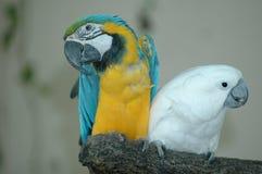 beaux perroquets photographie stock libre de droits