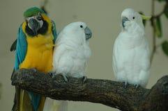 beaux perroquets photo libre de droits