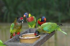 beaux perroquets photos libres de droits