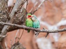 Beaux perroquets dans le zoo au parc Loro Parque, T?n?rife, ?les Canaries, Espagne de Loro photos stock