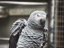 Beaux perroquets dans le zoo au parc Loro Parque, T?n?rife, ?les Canaries, Espagne de Loro image stock