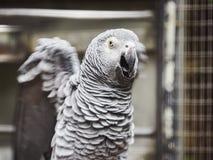 Beaux perroquets dans le zoo au parc Loro Parque, T?n?rife, ?les Canaries, Espagne de Loro photographie stock libre de droits