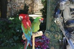 Beaux perroquets multicolores en Bulgarie image libre de droits