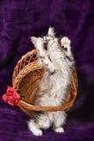 Beaux petits chatons Photo libre de droits