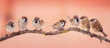 Beaux petits oiseaux de Noël panoramique de photo se reposant sur a image stock