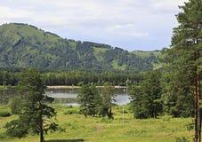 Beaux pins près du bâti petit Sinyuha Images stock