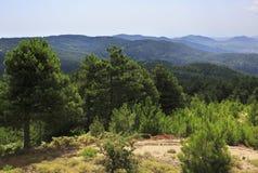 Beaux pins sur un dessus de montagne Photos stock