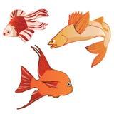 Beaux poissons émotifs iridescents multicolores Images libres de droits