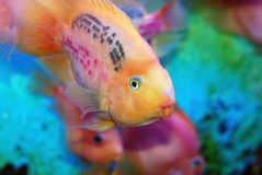 Beaux poissons Images stock