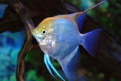 Beaux poissons Image stock