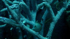 Beaux poissons dans l'aquarium clips vidéos