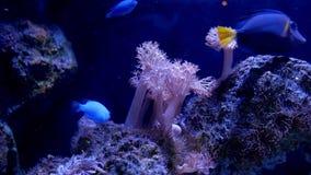 Beaux poissons dans l'aquarium banque de vidéos