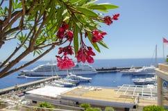 Beaux ports avec beaucoup de yachts au Monaco et des jardins pleins des fleurs images libres de droits