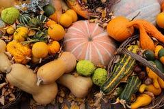 Beaux potirons colorés à un automne du marché en octobre - dans le jardin photos libres de droits