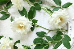 Beaux roses blanches, cadres de vintage et fond de velours Images libres de droits